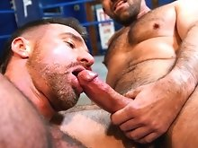 Muscle hunks Marco and Ross unwind after a quick sparring but lapping up each others sweaty bodies, their hairy chests and faces rubbing hard against